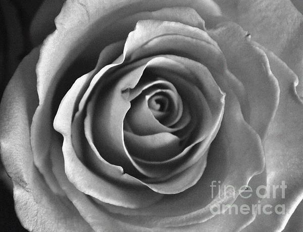 Dyana Rzentkowski - Light On A Rose