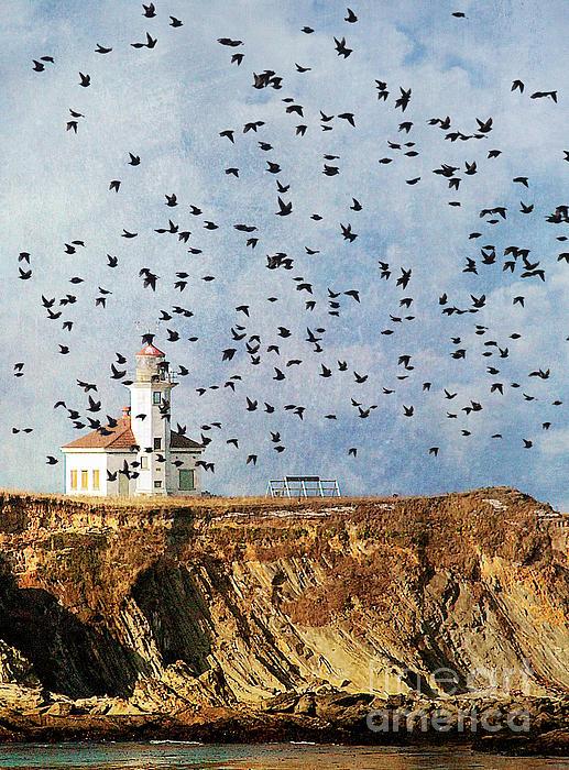 Lighthouse Birds  Print by Billie-Jo Miller