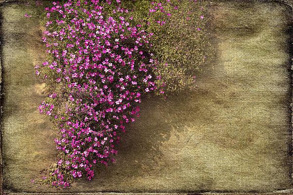 Lilac Branch Print by Svetlana Sewell