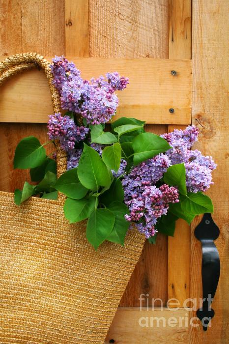 Lilacs In A Straw Purse Print by Sandra Cunningham