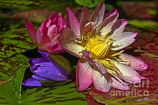 Lilies No. 20 Print by Anne Klar