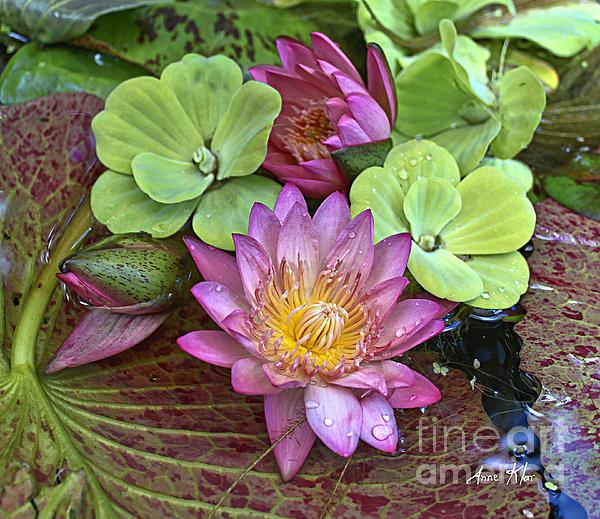 Lilies No. 21 Print by Anne Klar