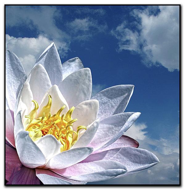 Lily Flower Against Sky Print by Photo by Daveduke.