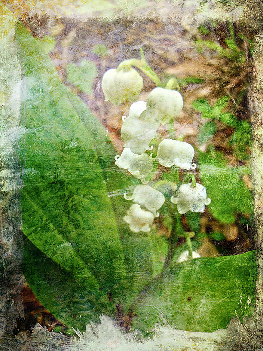 Mother Nature - Lily of the Valley - In White #1