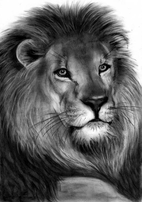 search results for �lion head drawing� � calendar 2015
