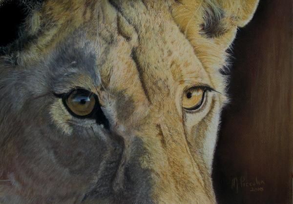 Lioness Eyes Drawing