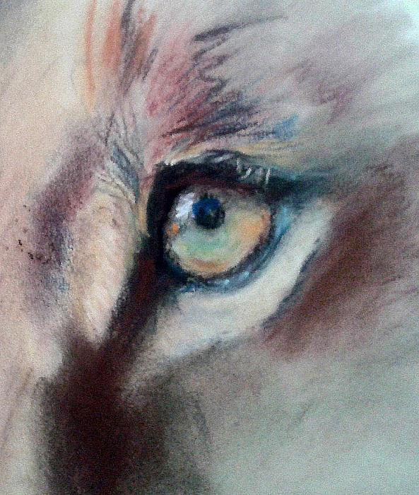 Michelle Wolff - Lioness Single Eye