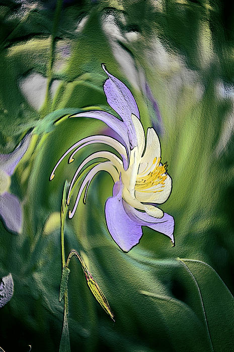 Liquid Columbine Photograph  - Liquid Columbine Fine Art Print