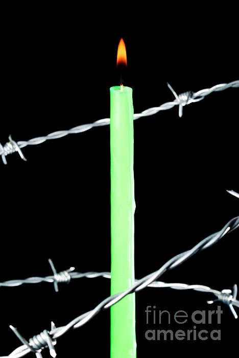Lit Candle Surrounded By Barbed Wire Print by Sami Sarkis