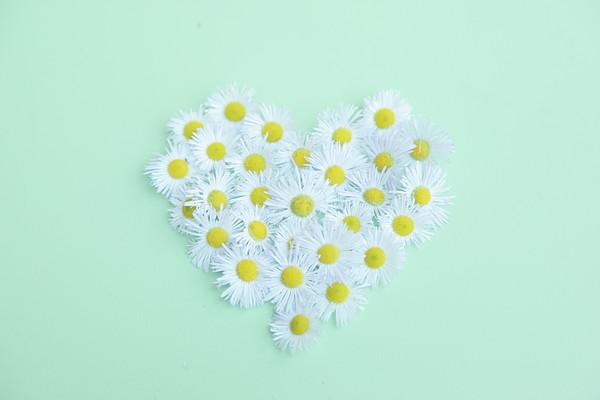 Little Daisy Print by Poppy Thomas-Hill