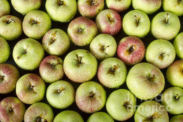 James BO  Insogna - Little Green Apples