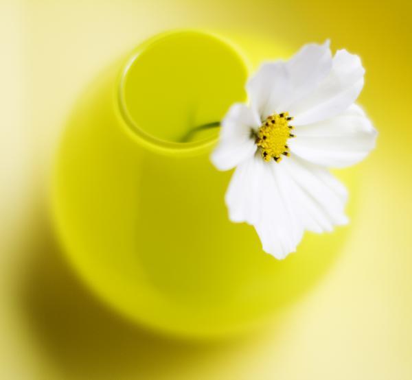 Little Yellow Vase Print by Rebecca Cozart