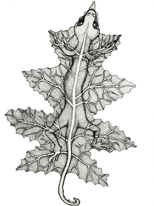 Lizard And Leaf Print by Nick Gustafson
