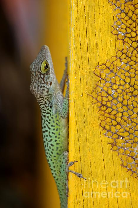 Lizard Print by Sophie Vigneault