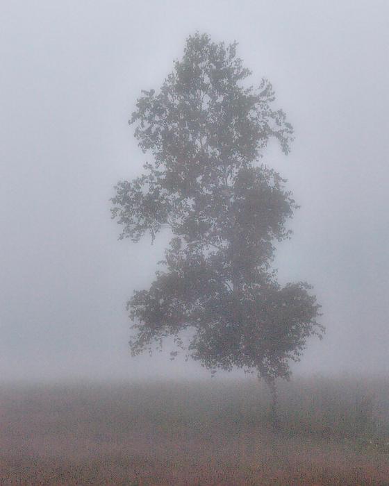 Yves Pelletier - Lone Birch