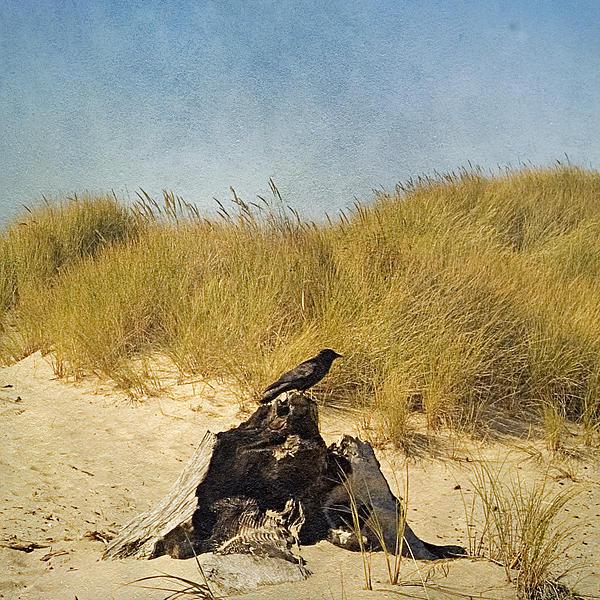 Bonnie Bruno - Lone Crow