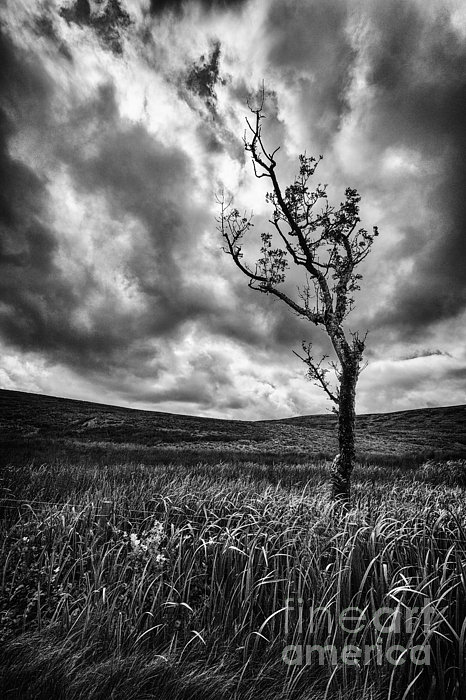 Lone Tree On The Ayrshire Moors Print by John Farnan