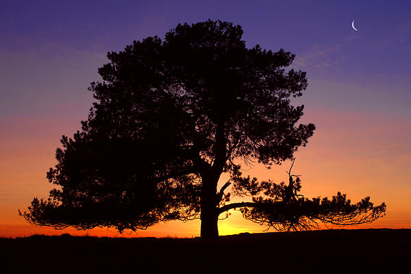 Will Corder - Lone Tree Sunset Silhouette