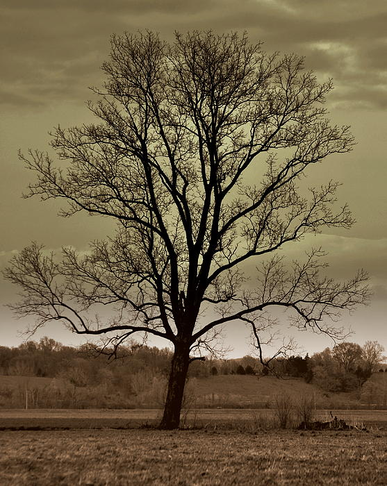 Lonely Tree Print by Marty Koch