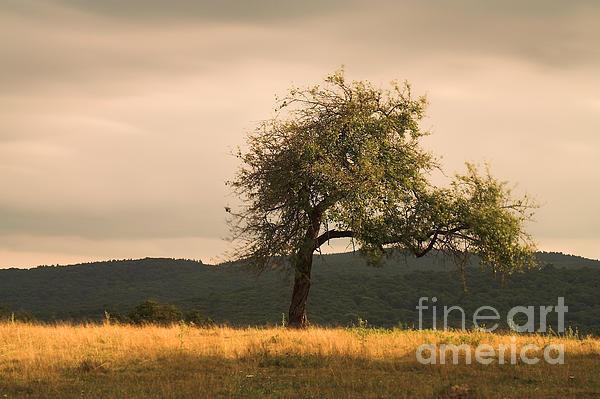 Lonely Tree Print by Odon Czintos