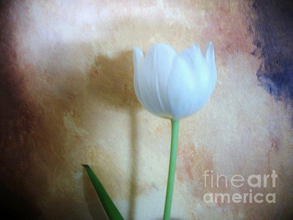 Marsha Heiken - Lonely Tulip