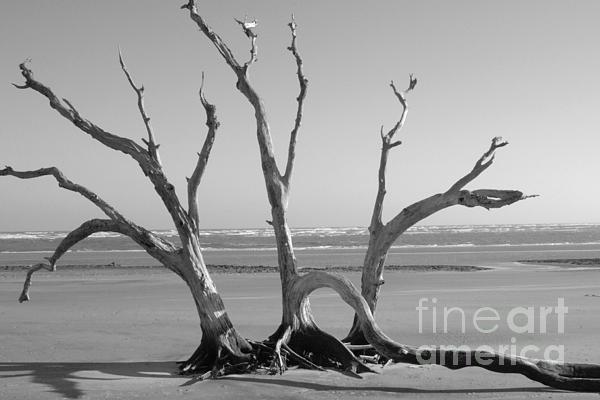Lonesome Tree Print by Melody Jones