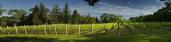 Bob Retnauer - Long Island Wine Country