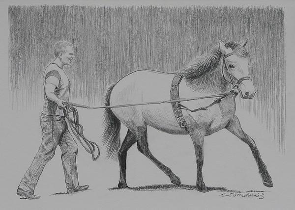 Long Reins Mallard Print by Tomas OMaoldomhnaigh
