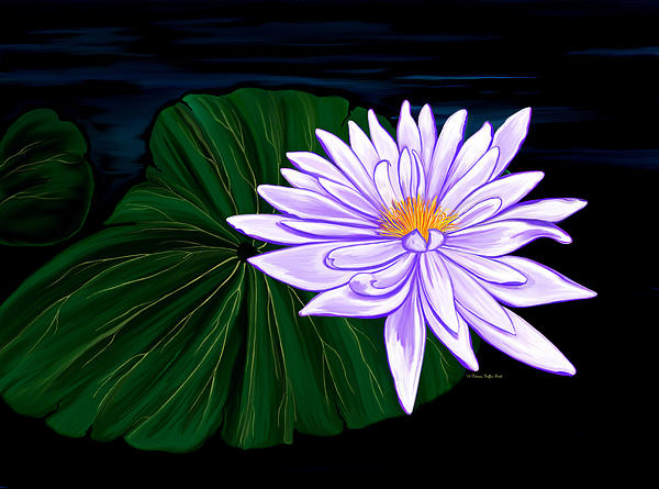Patricia Griffin Brett - Lotus Blossom at Night II