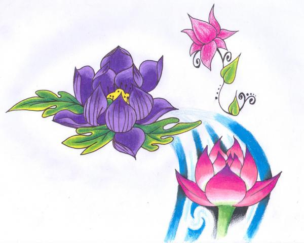 Lotus Drawing Darl Papple