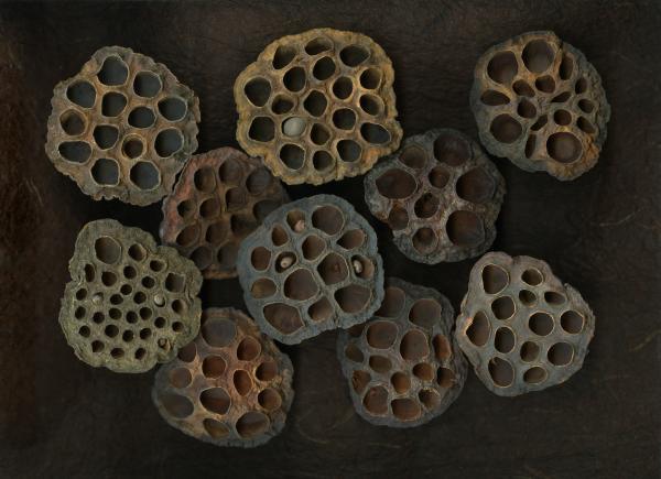 Lotus Pods Print by Christian Slanec