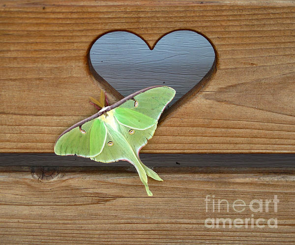 Luna Moth In Love Print by The Kepharts