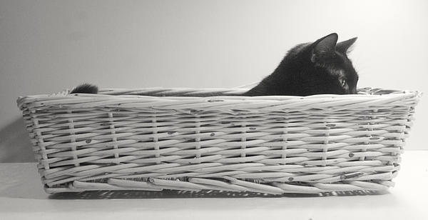 Lurking In The Basket Print by Bernadette Kazmarski