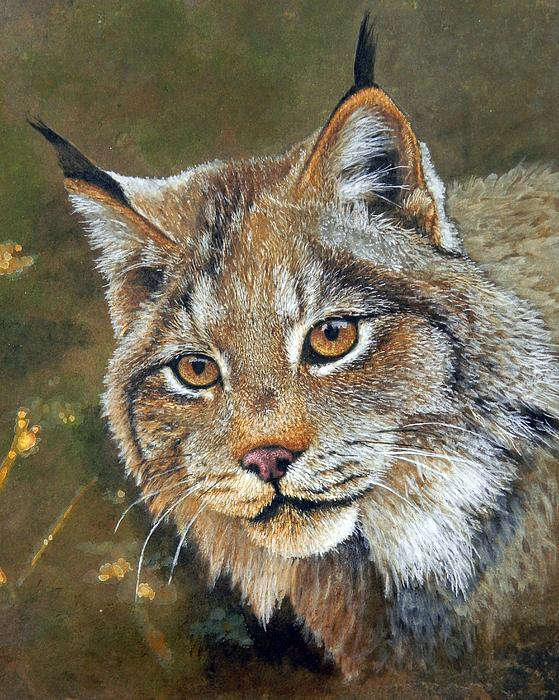 Stan White - Lynx Portrait