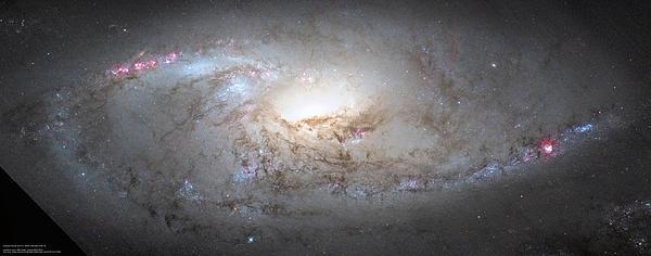 M106 Hubble Mosaic Print by Andre Van der Hoeven