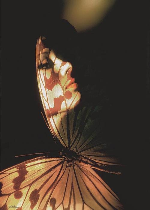 John Neville Cohen - Madam Butterfly