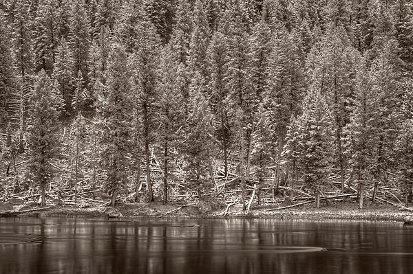 Madison River Yellowstone Bw Print by Steve Gadomski