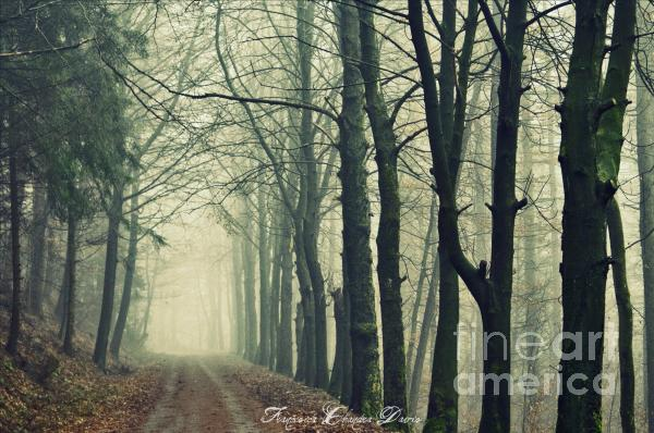 Magic Forrest Photograph  - Magic Forrest Fine Art Print