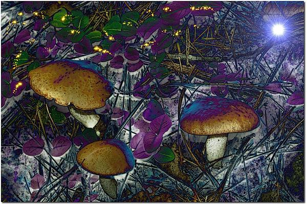Magic Mushrooms Print by Barbara S Nickerson