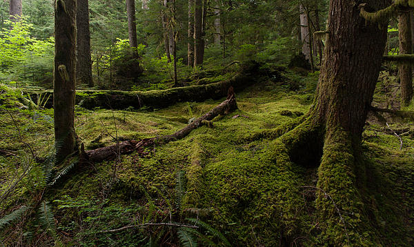 Magical Forest Print by Mike Reid