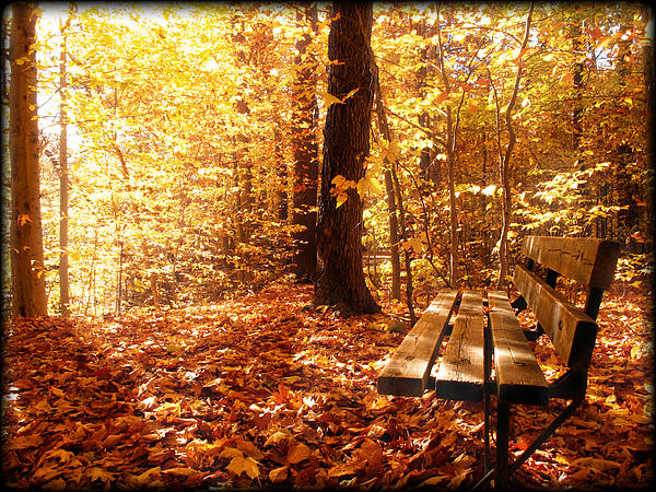 Magical Sunbeams On The Best Seat In The Forest Print by Chantal PhotoPix