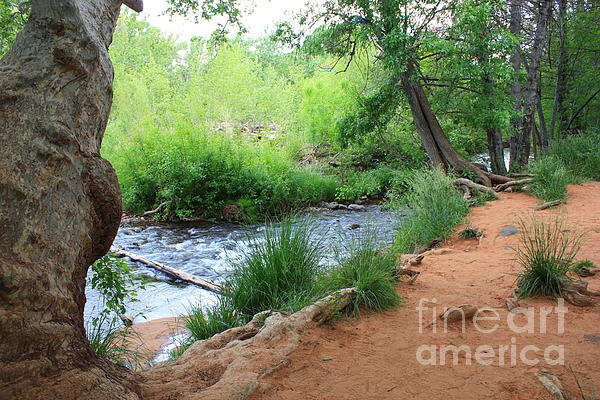 Magical Trees At Red Rock Crossing Print by Carol Groenen