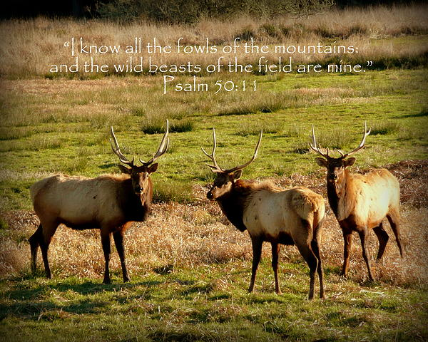 Magnificent Bull Elk Psalm 50 Print by Cindy Wright