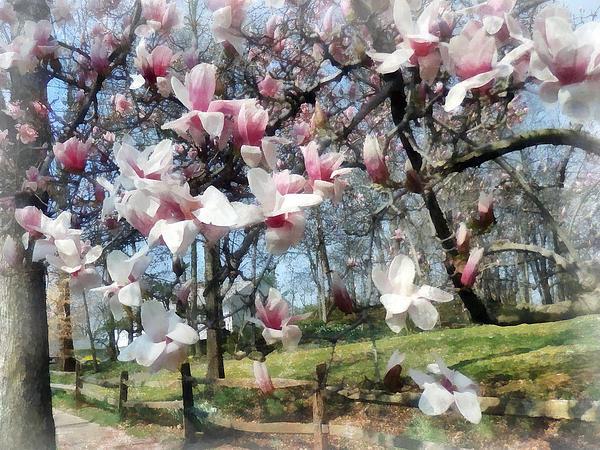 Susan Savad - Magnolia Closeup by Fence