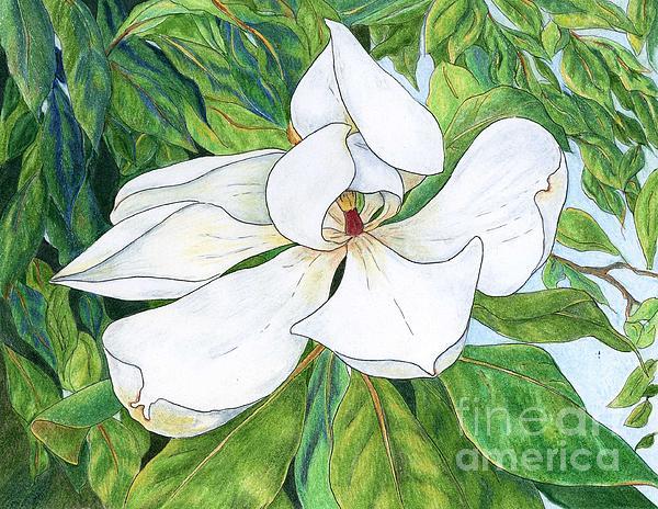 Magnolia Print by Linda Battles