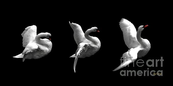 Dale   Ford - Majestic Swan Triptych