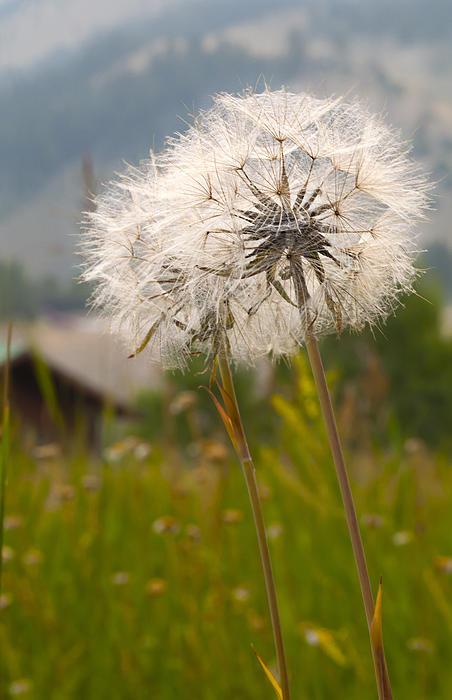Jennifer     - Make a Wish
