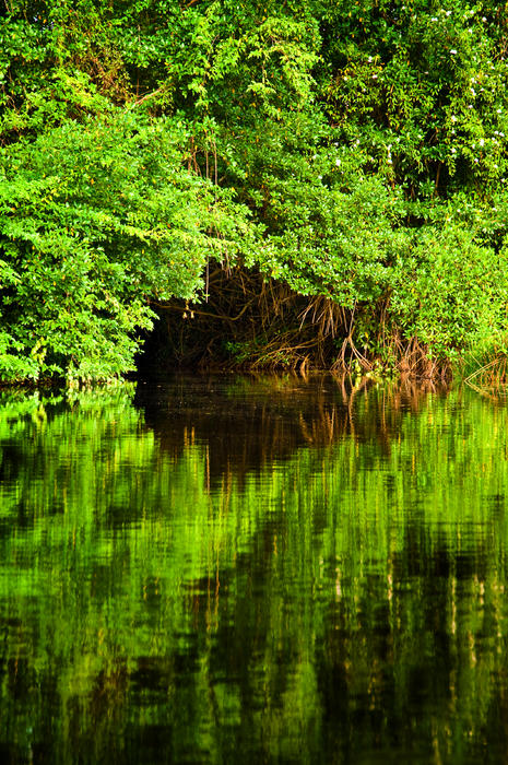 Mangrove Tunnel Photograph  - Mangrove Tunnel Fine Art Print