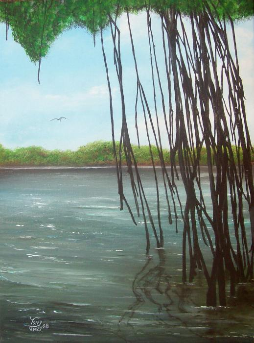 Tony Rodriguez - Mangroves