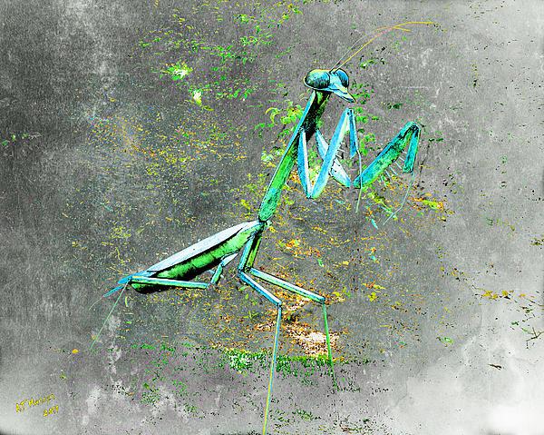 Mantis Print by Arne Hansen